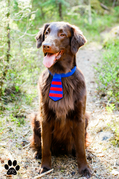 Large Red and Blue Striped Dog Tie