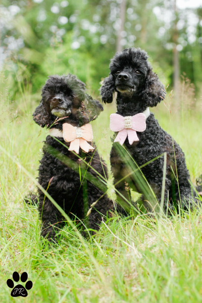 Poodles with bows