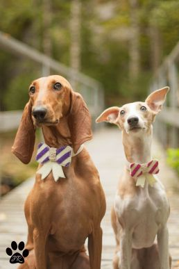 Dogs with bows